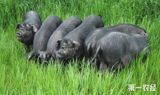 壁纸 犀牛 野生动物 550_326