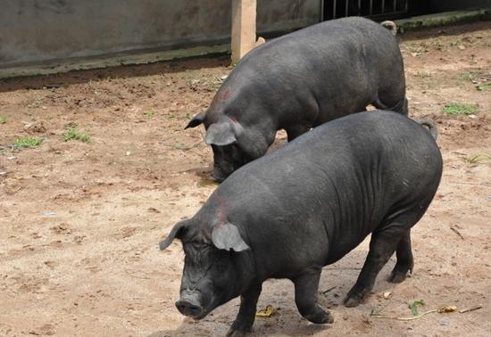 壁纸 犀牛 野生动物 550_378