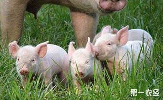 中小型养猪场建设如何做好赚钱又环保