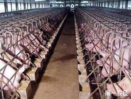 现代化猪场建立需要考虑哪些因素?