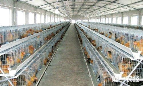 养鸡场鸡舍合理配置方法