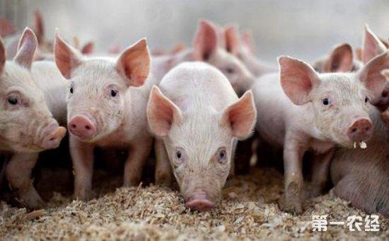 梦见拌猪食喂猪