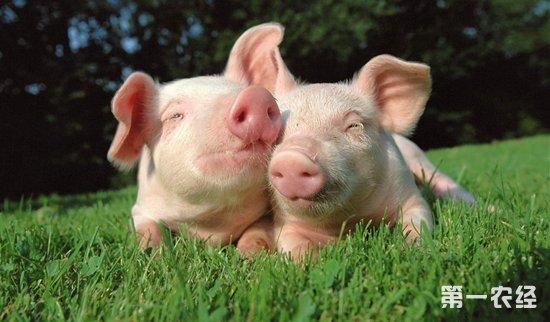 【常见问题】猪的人工授精有什么优点?如何提升受精率?   【专家解答】   猪的人工授精的优点   第一,人工授精提高优秀种公猪的利用率,发挥优秀公偖的作用,本交配种,l头公猪只能负担20一25头母猪;人工授精配种,l头公猪可负担200—300头母猪,甚至更多。   第二,人工授精有利于集中配种,同期产仔,特别是工厂比养猪场更显重要。   第三,人工授精减少疫病传播,有利于防疫。   第四,人工授精扩大公猪的配种范围,解决公母猪体重相差悬殊的配种困难。   第五,人工授精节省饲养管理费用