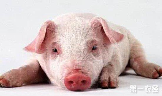 猪的关节结构图片