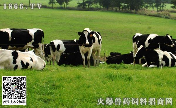 如何加强奶牛冬季饲养管理,确保奶牛安全过冬!