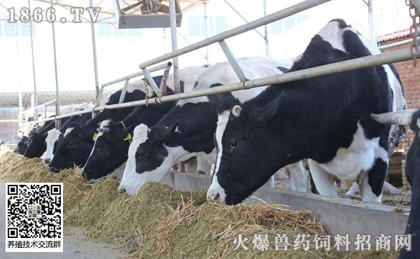 牛前胃弛缓的发病原因?牛前胃弛缓的治疗方案?