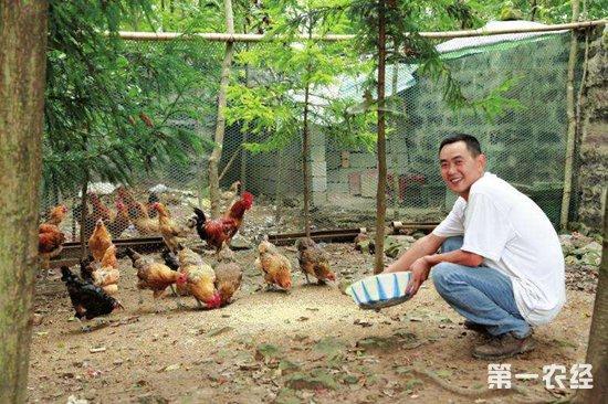 养鸡秘诀:食醋和酵母在养鸡中的作用