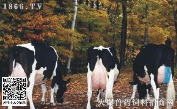 奶牛乳房炎的种类?奶牛乳房炎如何治疗?