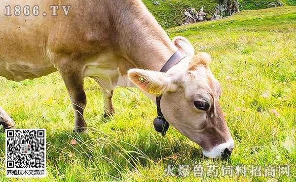 基础母牛冬季管理技术要点介绍,收藏了!