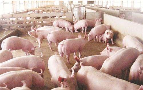 东方希望投40.3亿元山东养100万头猪