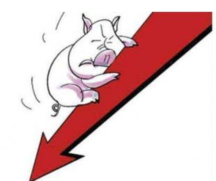 猪价继续大面积下跌 南北齐落