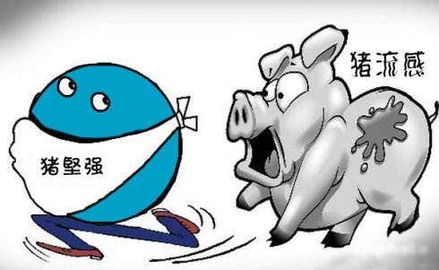 冬季猪场如何预防猪流感? (1)
