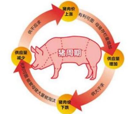 养猪十几年!谈谈猪周期!