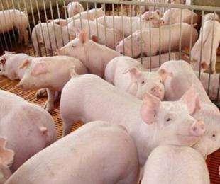 养猪场外来车辆和人员的消毒要点