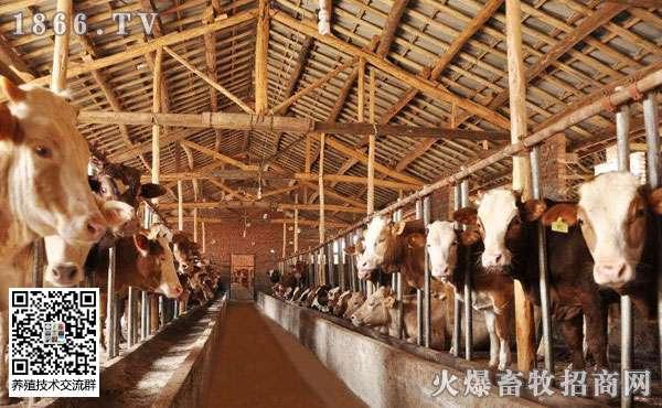 养牛最新技术,养10头牛一年的利润是多少?