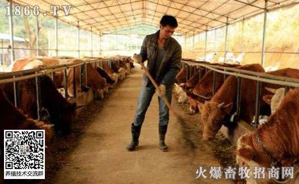 养肉牛的风险,养20头牛国家补贴多少?