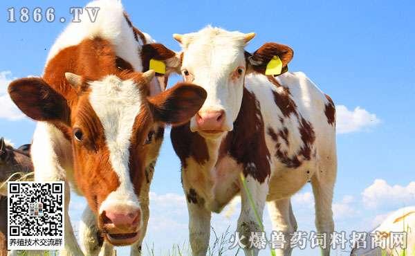 奶牛蹄病有哪些,主要症状是什么?