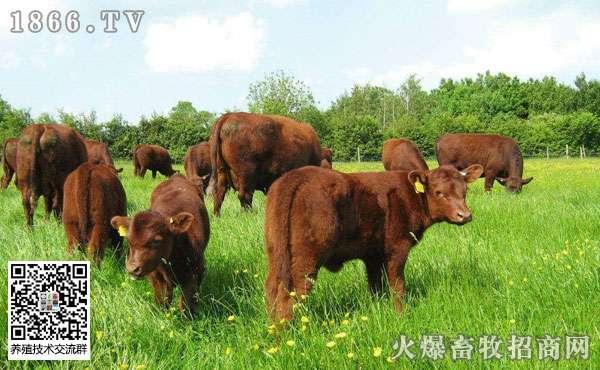 2019养牛技术有哪些?养牛的利润是多少?