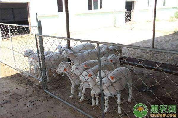肉羊疫病的综合防控措施