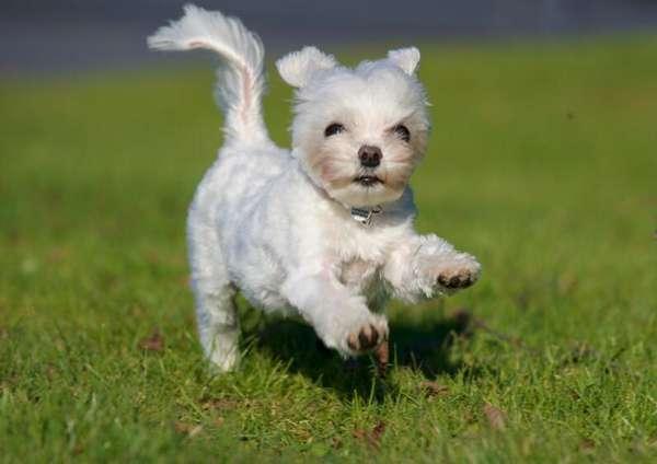 引发狗袭击的因素是什么? 如何处理危险的狗?