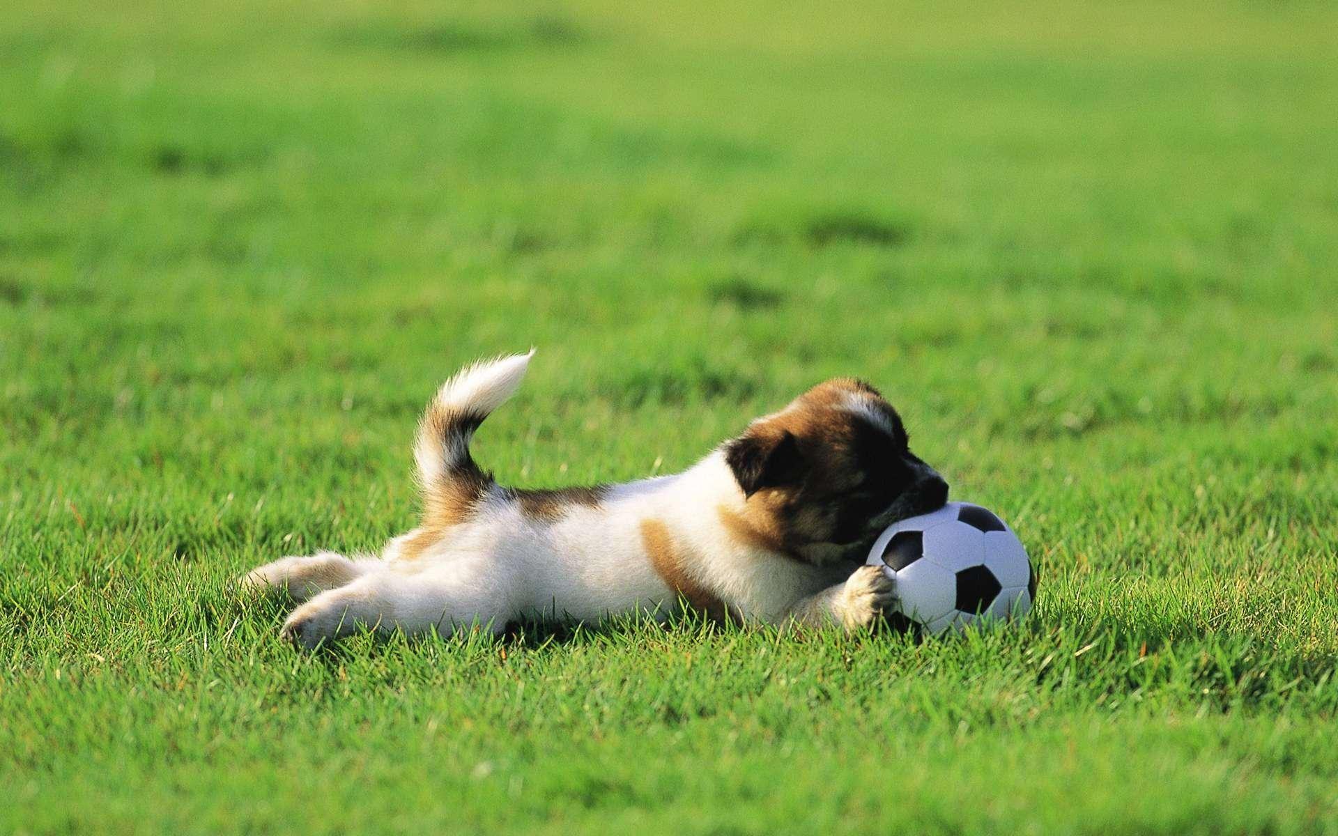 小狗狗缺钙会出现什么情况?要如何为狗狗补钙呢?