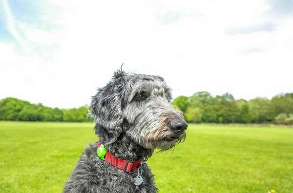 狗狗越来越呆了是怎么回事? 以下几个表现反映狗狗认知功能出现障碍