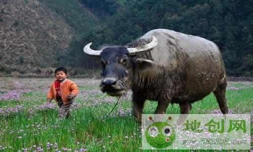 贵阳王仁欢开放牛娃电子商务公司的创业故事
