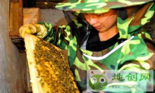 广安王旗返乡创业养蜜蜂年入25万