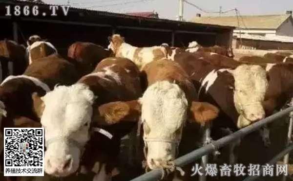 如何给牛驱虫?给牛驱虫要注意什么?