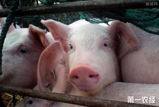 养猪要如何控制猪舍内的环境?