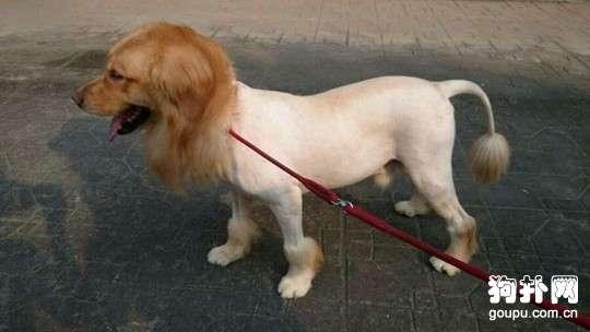 狗散热的原理是什么_狗狗