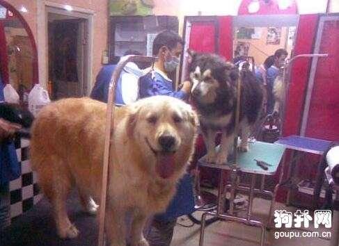 如何开一家宠物店?宠物店长必知的装修知识及费用!
