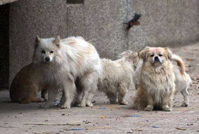 """关于狗狗的这10条""""你以为"""",不要让你的想法伤害了它们"""