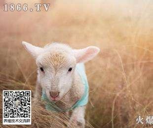 养羊兽药使用中应注意的几个问题!