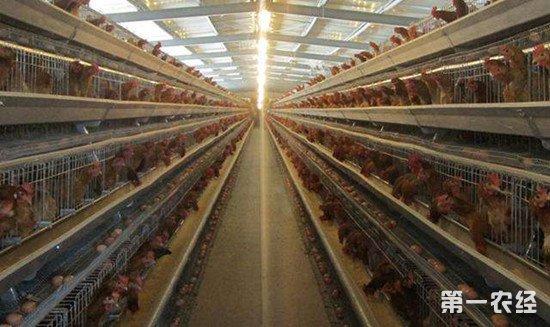 夏季养鸡管理:鸡舍通风注意事项