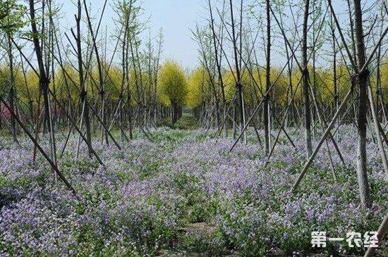 安徽六安:深挖林业潜能 推进全产业链发展