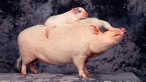 """欧盟、俄罗斯、巴西等国争当""""替补""""扩大对华猪肉、大豆出口"""