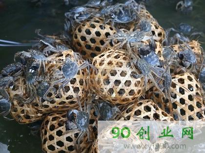 养虾致富案例:江苏扬州河蟹罗氏沼虾混养致富