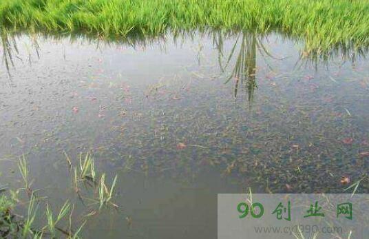 """杜小钟""""精养""""小龙虾亩赚五千,""""虾稻模式""""养虾致富"""