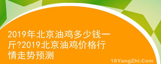 2019年北京油鸡多少钱一斤?2019北京油鸡价格行情走势预测
