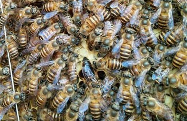 让蜜蜂快速做脾乐高蝙蝠侠3科瓦德星怎么解锁图片