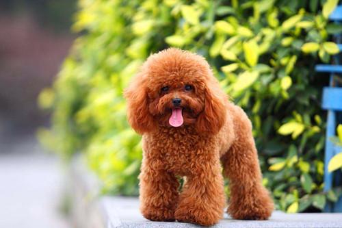 【宠物的保养小窍门】狗狗严重便秘吃一点点泄药,狗狗严重便秘能喂小量的泄药吗