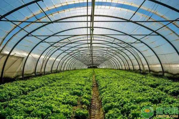河南农业种植补贴有哪些?补贴标准是多少?