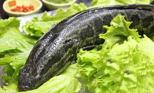 黑鱼的营养价值及功效?吃黑鱼的禁忌?