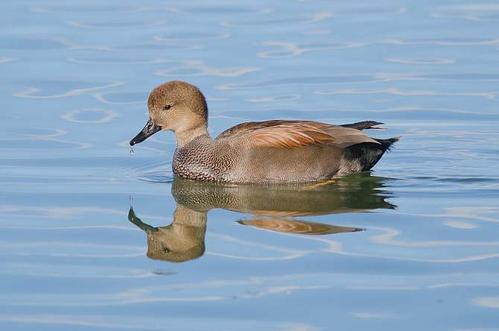 春季养鸭子应该注意什么?怎样养鸭子不生病?
