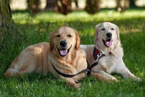 怎么才能训练狗狗听话