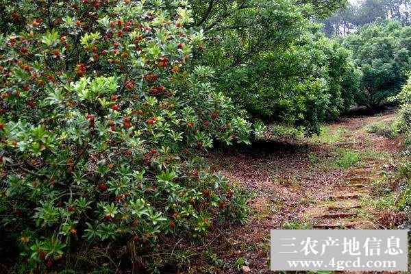 3月可以种什么水果?三月份果树种植管理指南