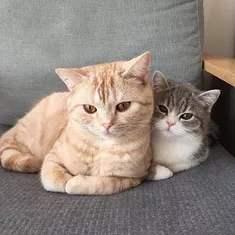训练斯可可猫不乱抓家具