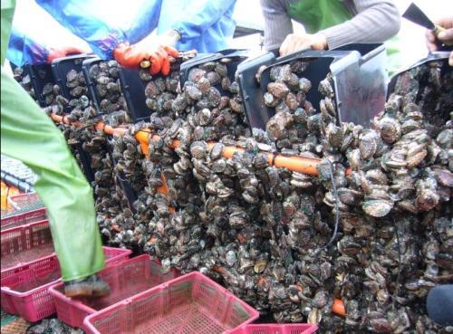鲍鱼养殖条件:需要什么环境养殖?对水质的要求有哪些?