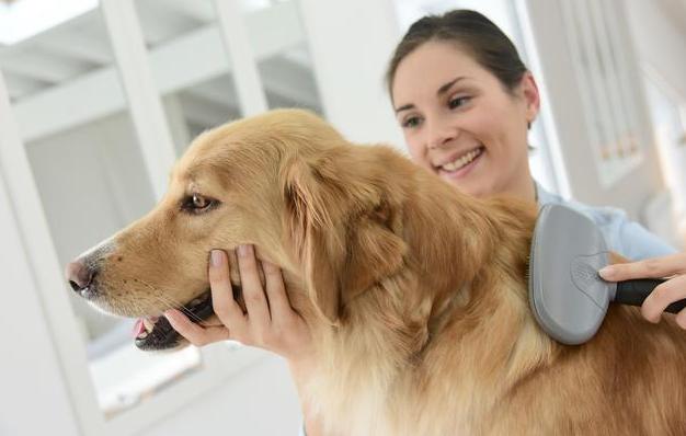 给狗狗洗澡,很多人都是忽视的5点,这些年白洗了!